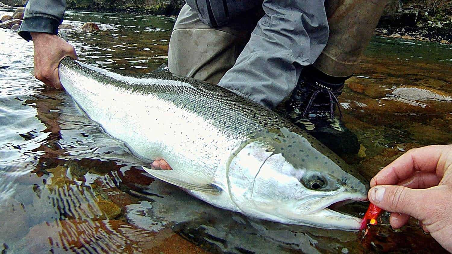 Vancouver Fishing Report